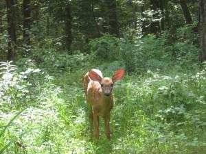 Deer Good 2